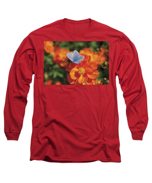 Long Sleeve T-Shirt featuring the photograph Common Blue Butterfly by Lana Enderle