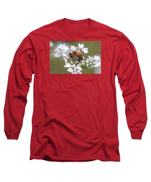 Honeybee On Cilantro Long Sleeve T-Shirt by Lucinda VanVleck