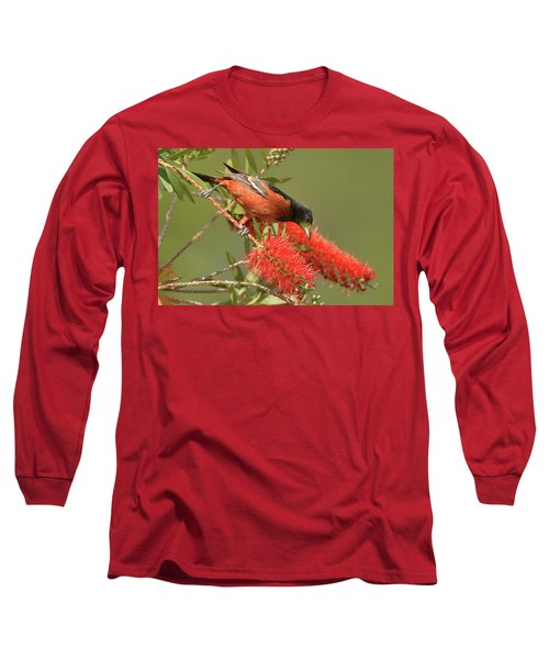Orchard Oriole  Long Sleeve T-Shirt by Alan Lenk