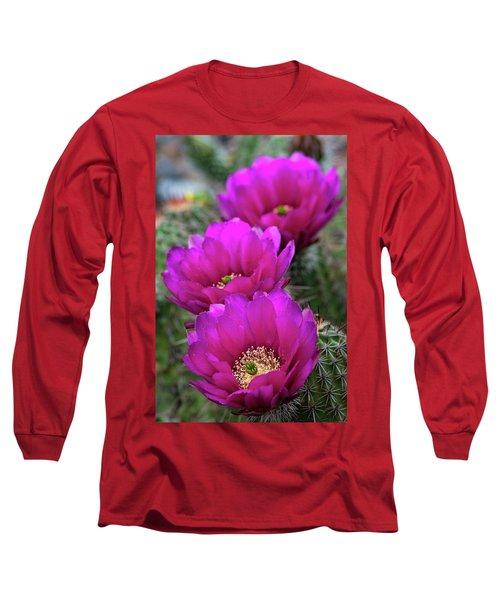 Long Sleeve T-Shirt featuring the photograph Pink Hedgehog Cactus  by Saija Lehtonen