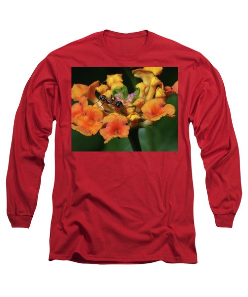 Long Sleeve T-Shirt featuring the photograph Ant On Plant  by Richard Rizzo