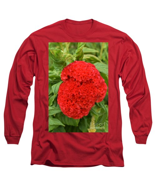 Bright Red Cockscomb Long Sleeve T-Shirt