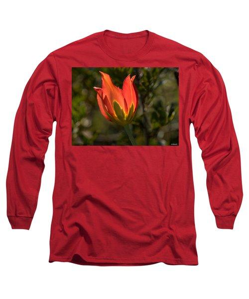Flaming Beauyy Long Sleeve T-Shirt by Uri Baruch