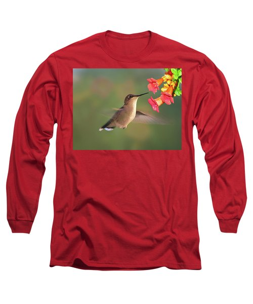 Hummer With Trumpet Vine Flowers Long Sleeve T-Shirt by Judy Johnson