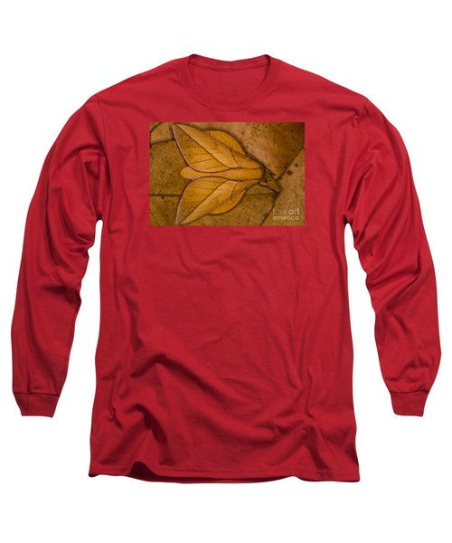 Long Sleeve T-Shirt featuring the photograph Oiticella Convergens Moth by Gabor Pozsgai