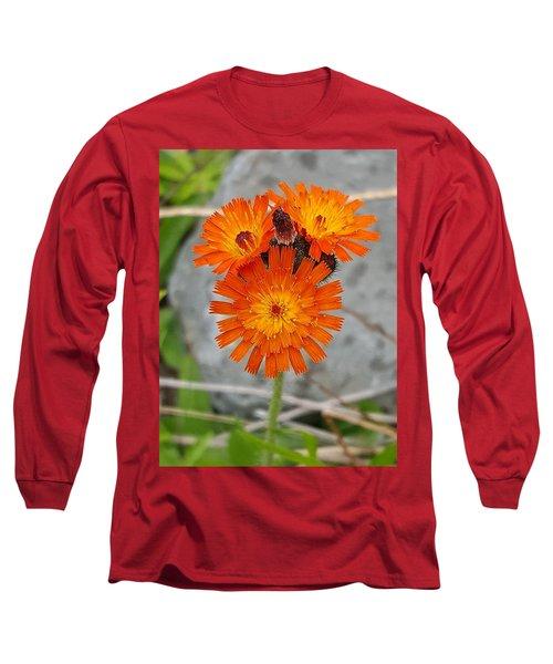 Orange Hawkweed Long Sleeve T-Shirt