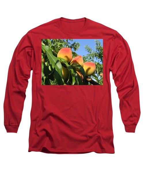 Peaches Long Sleeve T-Shirt by Barbara Yearty
