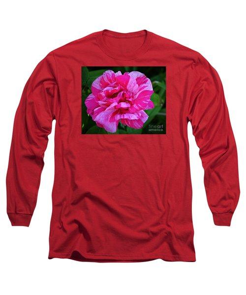 Pink Candy Stripe Rose Long Sleeve T-Shirt