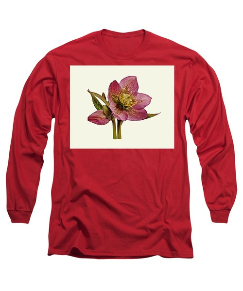 Red Hellebore Cream Background Long Sleeve T-Shirt by Paul Gulliver