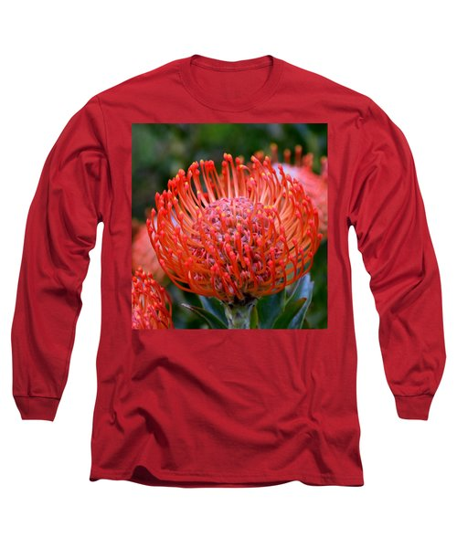Red  Pincushion Protea Long Sleeve T-Shirt by Werner Lehmann