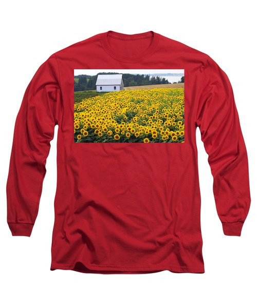 sunflowers in PEI Long Sleeve T-Shirt