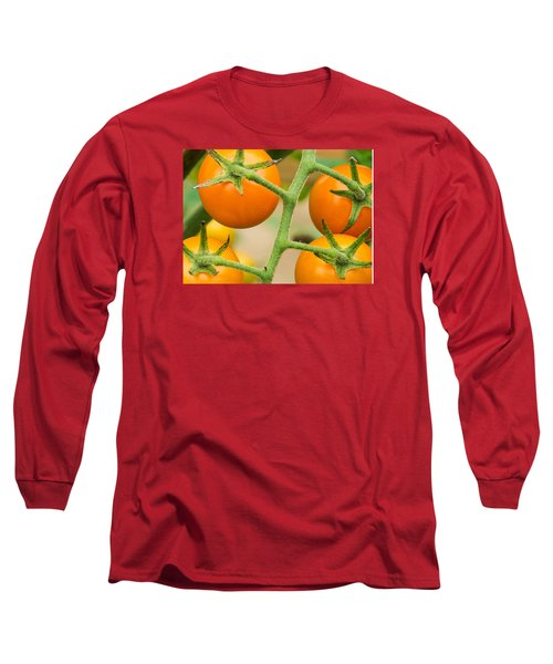 Long Sleeve T-Shirt featuring the photograph Yellow Tomatoes by Paul Miller
