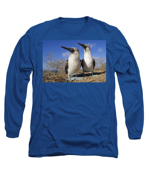 Blue-footed Booby Courting Couple Long Sleeve T-Shirt by Tui De Roy