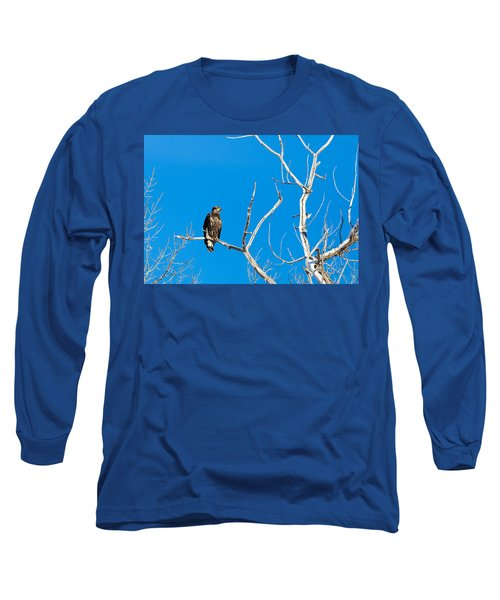 Immature Bald Eagle Long Sleeve T-Shirt