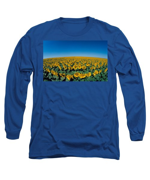 Sunflowers Helianthus Annuus In A Field Long Sleeve T-Shirt