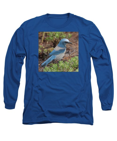 Scrub Jay Framed In Green Long Sleeve T-Shirt by Paul Rebmann