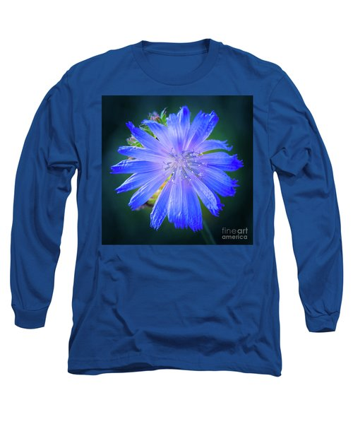 Vivid Blue Chicory Blossom Close-up With Its Delicate Petals And Stamen Long Sleeve T-Shirt
