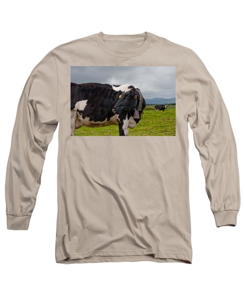 Cow Wearing Cowbell  Long Sleeve T-Shirt