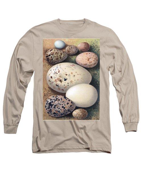 Assorted Birds Eggs, Historical Art Long Sleeve T-Shirt