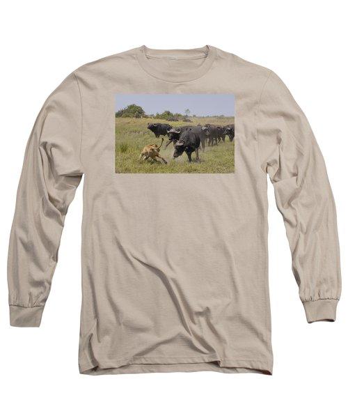 African Lion Evading Cape Buffalo Africa Long Sleeve T-Shirt