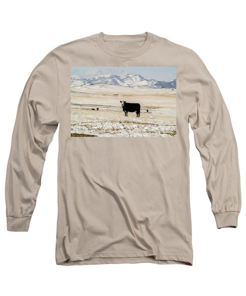 Long Sleeve T-Shirt featuring the photograph Black Baldy Cows by Sue Smith