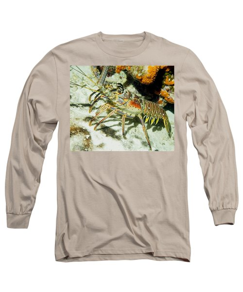 Caribbean Spiny Reef Lobster  Long Sleeve T-Shirt by Amy McDaniel