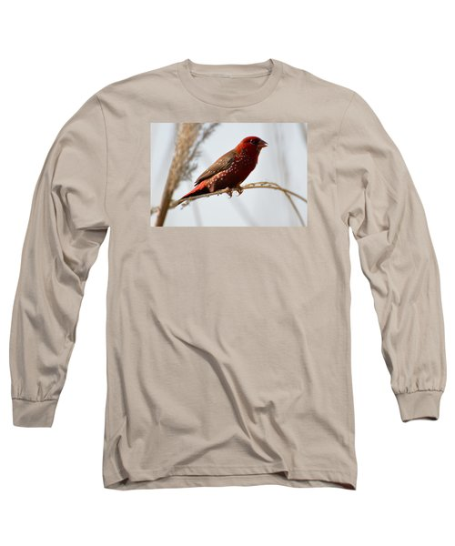 Colour Me Red Long Sleeve T-Shirt by Fotosas Photography