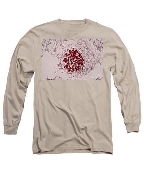 Drosophila Chromosomes Long Sleeve T-Shirt