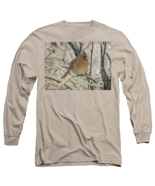 Female Cardinal In The Snow II Long Sleeve T-Shirt