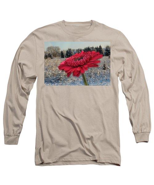 Gerbera Daisy In The Snow Long Sleeve T-Shirt