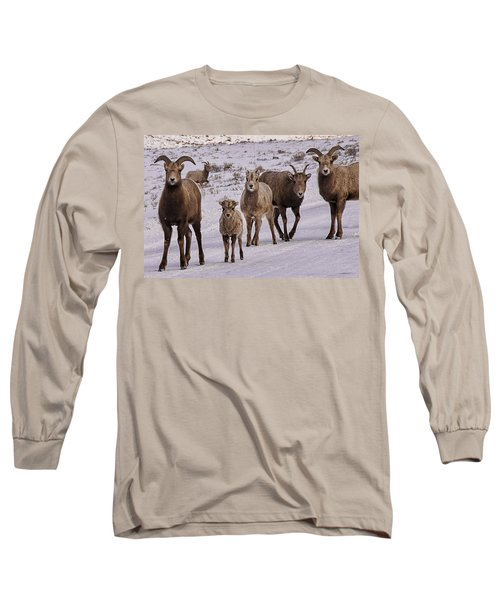 Long Sleeve T-Shirt featuring the photograph Not Too Sheepish by Priscilla Burgers