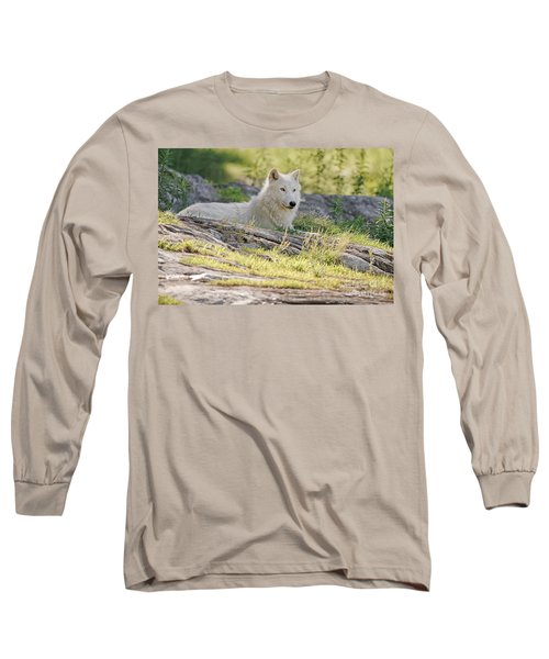 Long Sleeve T-Shirt featuring the photograph Resting Arctic Wolf by Wolves Only