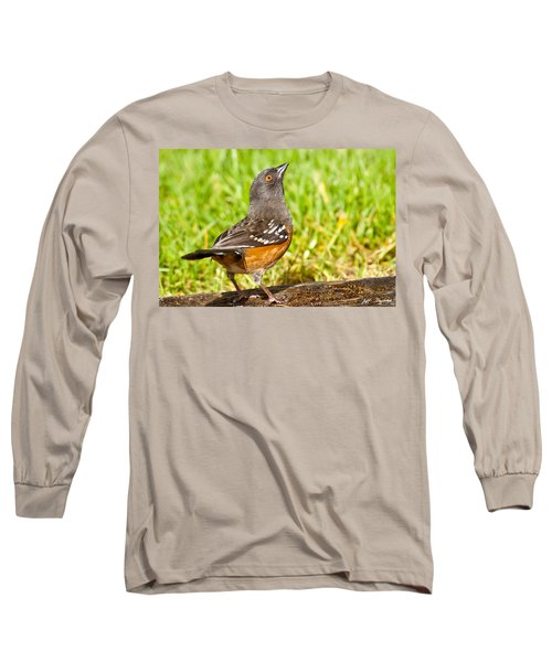 Spotted Towhee Looking Up Long Sleeve T-Shirt by Jeff Goulden