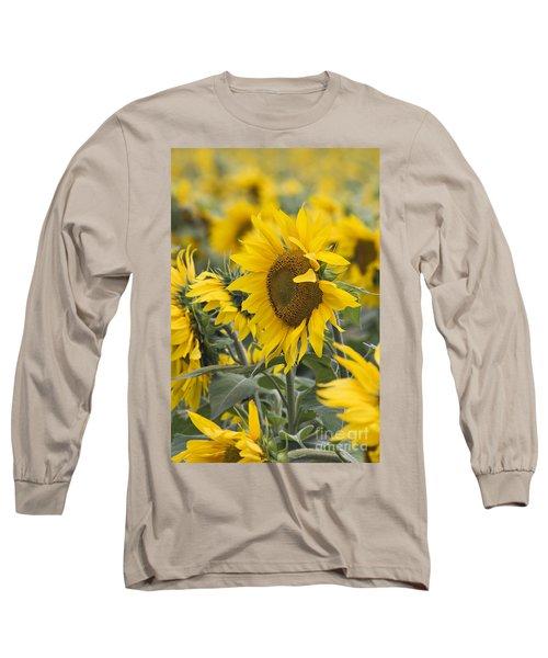 Sunflowers - D008561 Long Sleeve T-Shirt