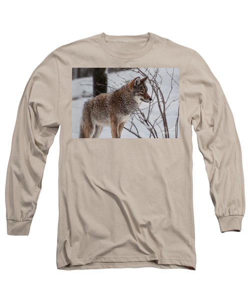 Winter Coyote Long Sleeve T-Shirt by Bianca Nadeau