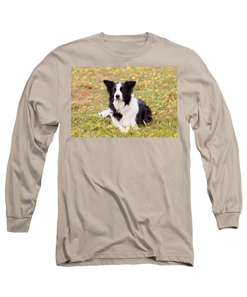 Border Collie In Field Of Yellow Flowers Long Sleeve T-Shirt