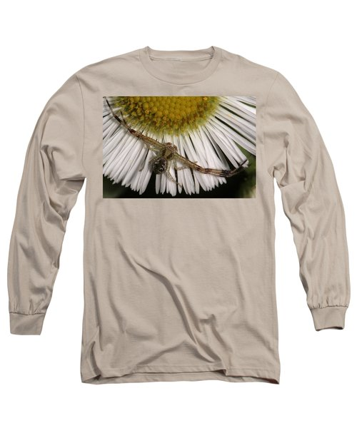 Flower Spider On Fleabane Long Sleeve T-Shirt by Daniel Reed