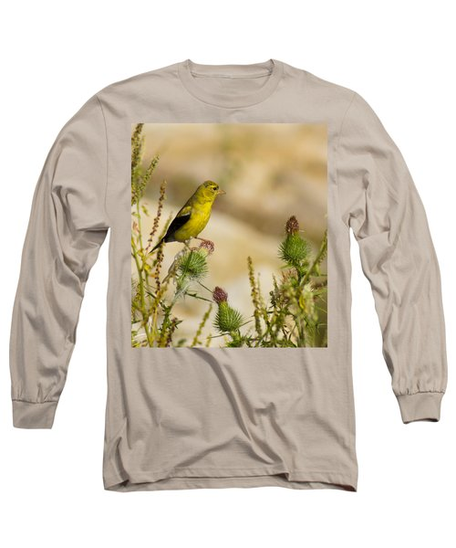 Goldfinch On Lookout Long Sleeve T-Shirt