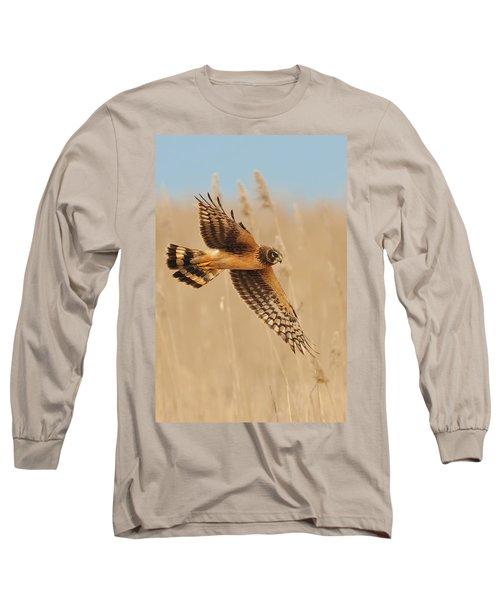 Harrier Over Golden Grass Long Sleeve T-Shirt