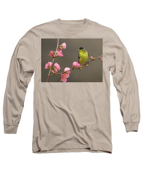 Lesser Goldfinch Long Sleeve T-Shirt by Doug Herr