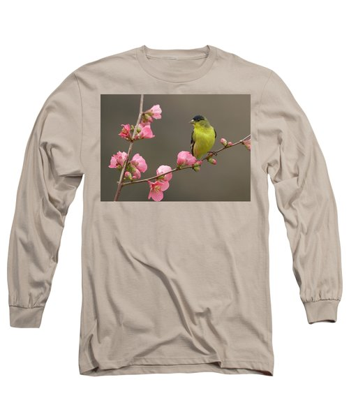 Lesser Goldfinch Long Sleeve T-Shirt