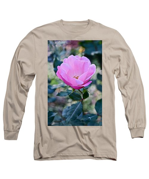 2015 After The Frost At The Garden Pink  Rose Long Sleeve T-Shirt