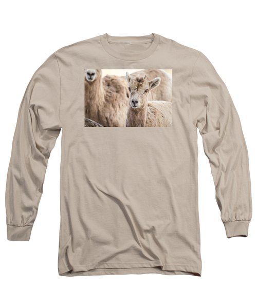 Long Sleeve T-Shirt featuring the photograph A Little Lamb Cuteness by Yeates Photography