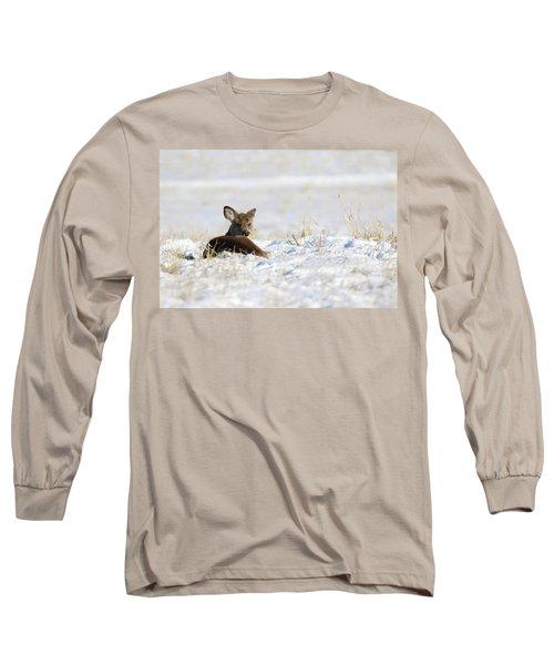 Bedded Fawn In Snowy Field Long Sleeve T-Shirt by Brook Burling