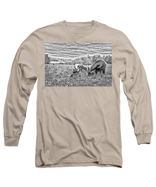 Belted Galloway Beef Cattle Long Sleeve T-Shirt