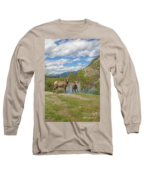 Bighorn Sheep In The Rocky Mountains Long Sleeve T-Shirt