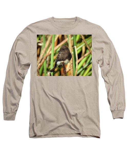 Black Phoebe Close Up Long Sleeve T-Shirt