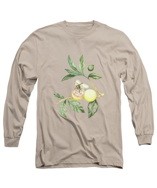 Branches Of The Guava Tree With Feeding Butterfly By Cornelis Markee 1763 Long Sleeve T-Shirt
