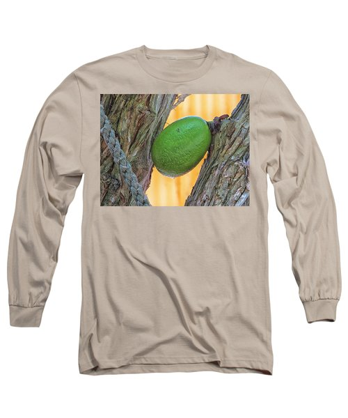 Long Sleeve T-Shirt featuring the photograph Calabash Fruit by Bill Barber