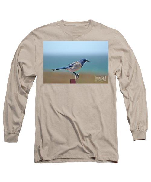 California Scrub Jay Long Sleeve T-Shirt